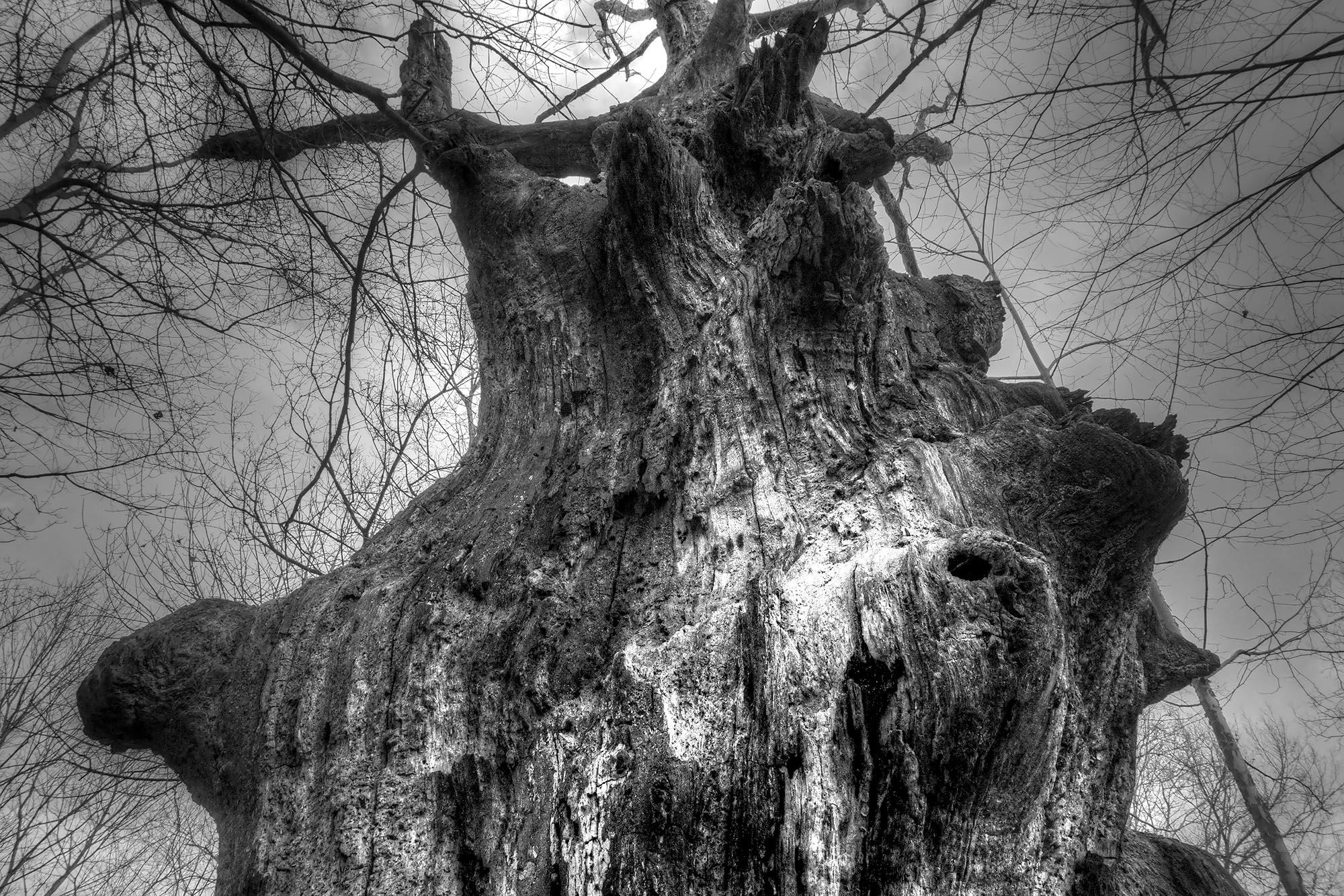 """Wicked Wood"" - Mark_Polege"